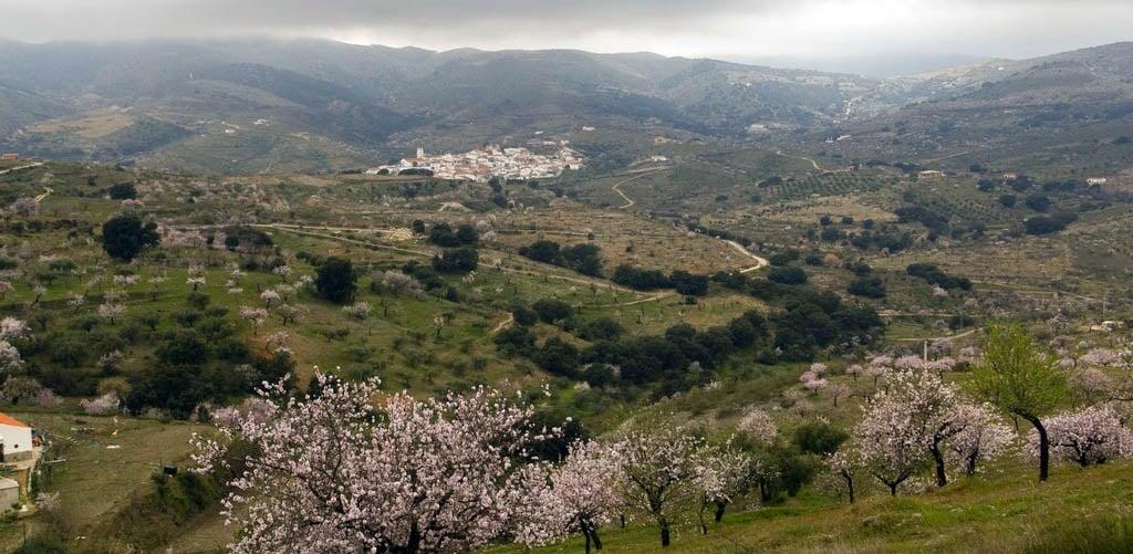 Paisaje de Tahal con almendros en flor