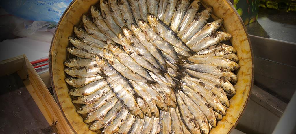 arenques sardinas almeria gastronomia