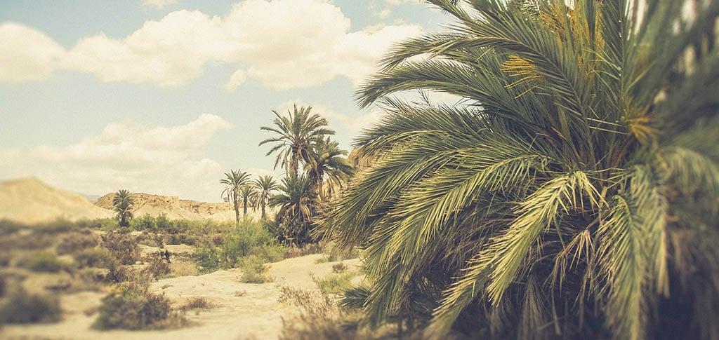 desierto-almeria-gastronomia